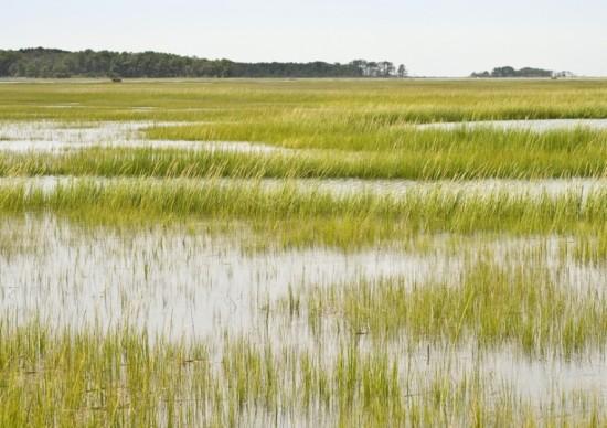 world-wetlands-day-2013