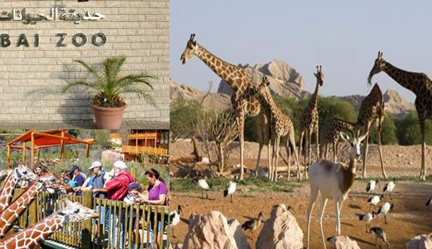 everything-you-need-to-know-about-dubai-zoo